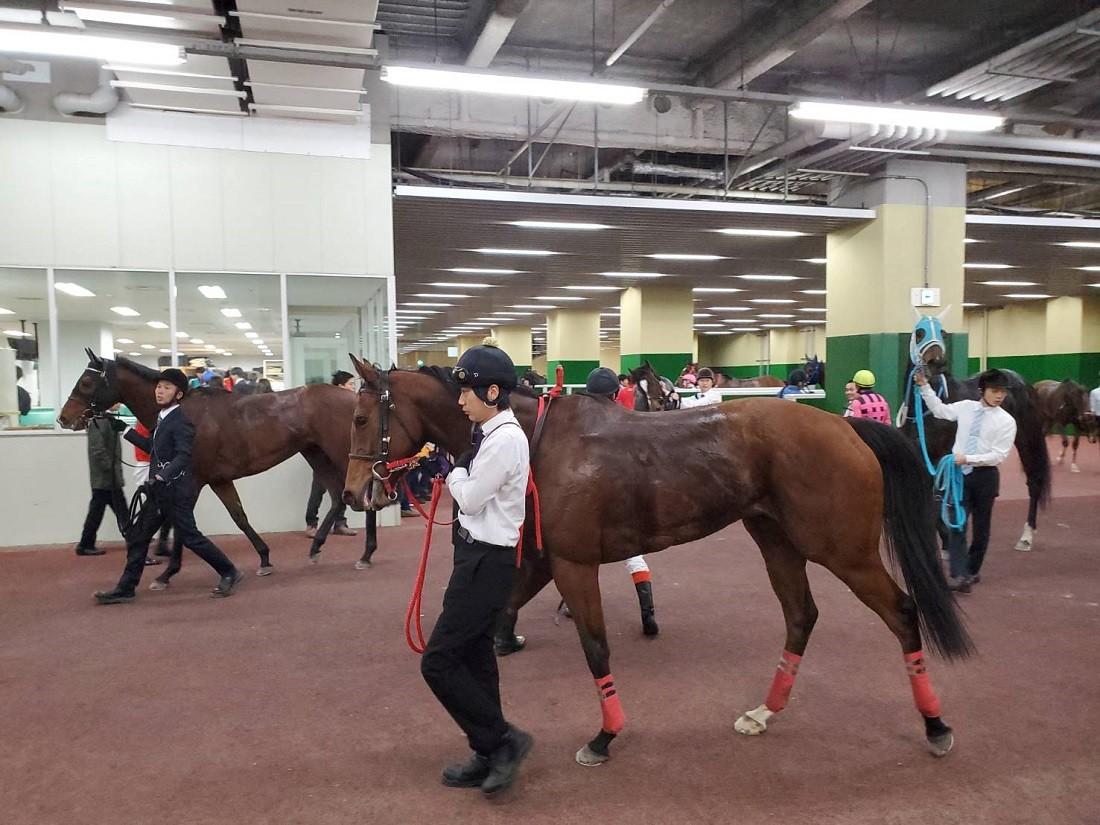 レースを終えた馬が引き上げる検量室前。ジョッキーは慌ただしく30分後のレース準備に追われる。
