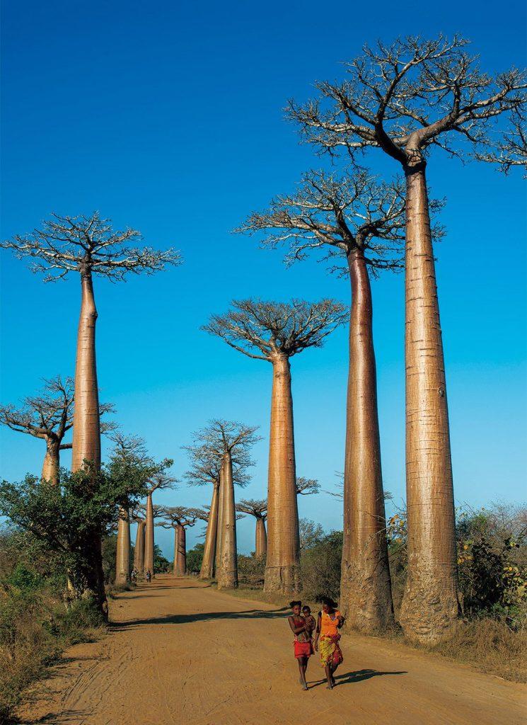 baobabu