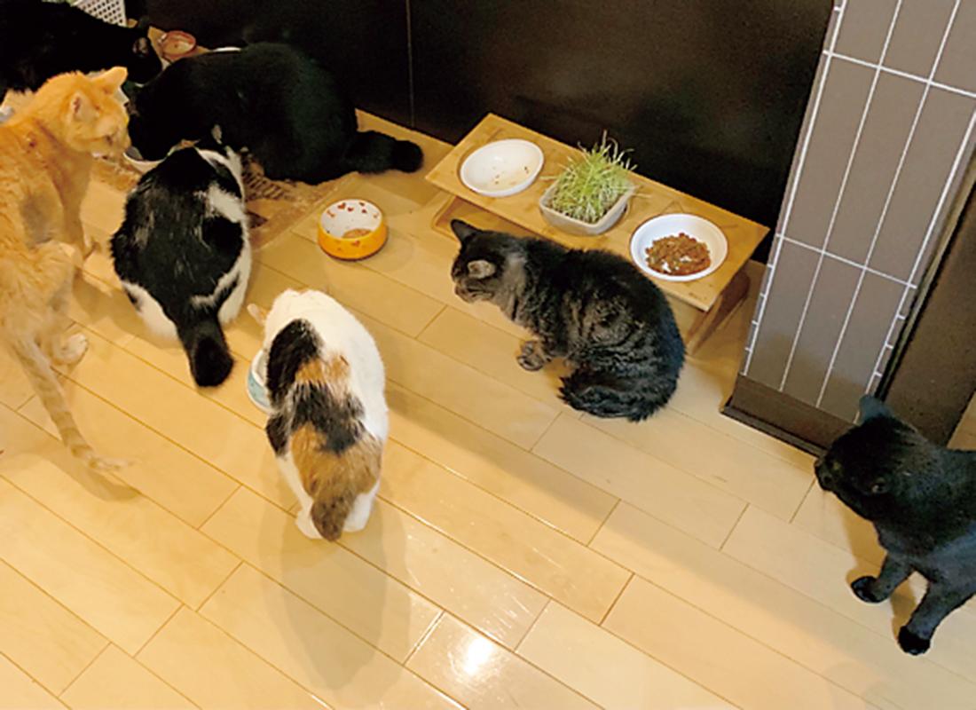 自宅で飼っている6匹の保護猫